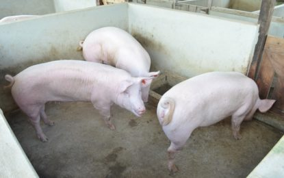 Swine producers partnering with GLDA to increase output