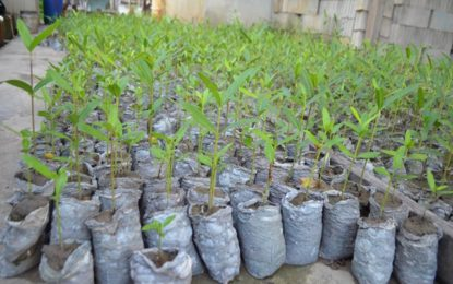 NAREI to speed-up mangroves' regeneration at Better Hope to Sparendaam