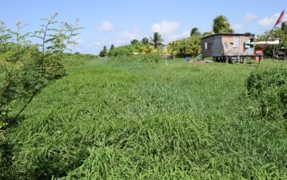 Gov't evaluating land availability to address squatting