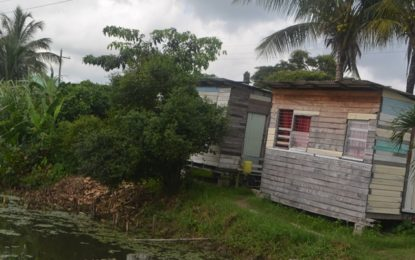 Squatter settlements will not be tolerated – Valerie Patterson