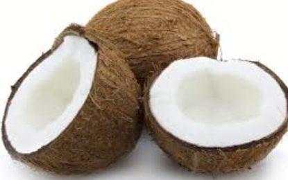 Overseas assistance to help grow coconut industry