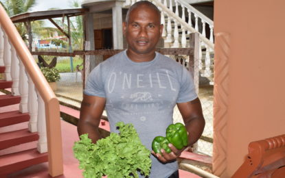Local farmer able to compete with imported peppers