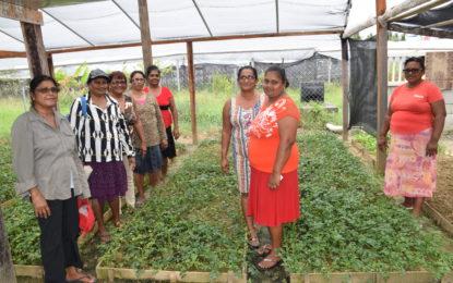 Seasoning is big business for Region Five women