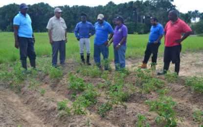 Investor-friendly Intermediate savannahs a thriving agriculture hub -practical agri feasibility study completed