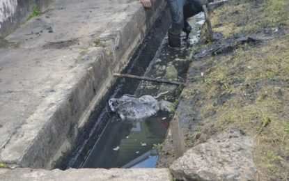 Albouystown residents assist gov't to desilt drains