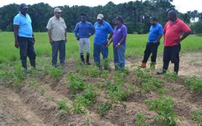 More initiatives undertaken to expand the agriculture sector