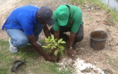 Community Group responds to Minister's tree planting call
