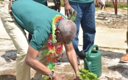 Region One Turmeric factory commissioned – as National Tree Day observed