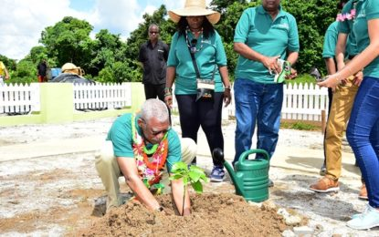President Granger observes Tree Day and commissions Tumeric Factory in Region One