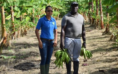 Farmers benefit from Black Sigatoka Management Programme