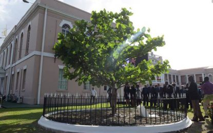 "Commonwealth Tree a ""symbol of strength"" – Min. Trotman at unveiling"