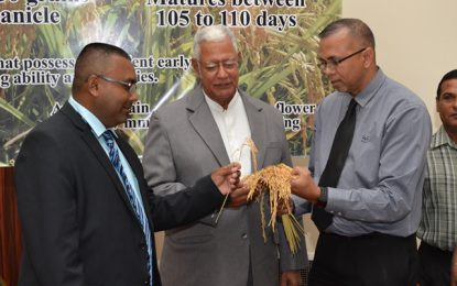 New paddy variety to increase yields