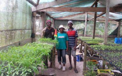 Linden's CDC encouraging subsistence farming