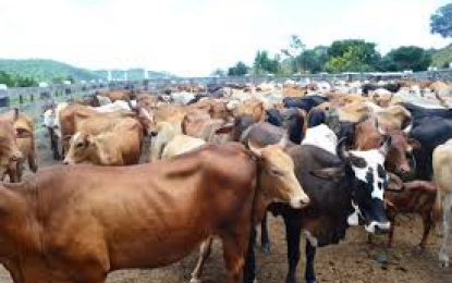 IICA supports Livestock Authority programme for animal disease management