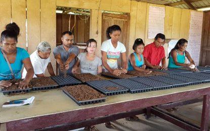 NAREI educates Baramita households on kitchen garden techniques
