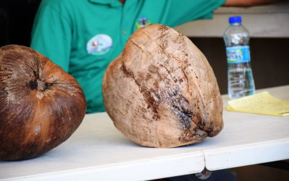 Coconuts more than a commodity