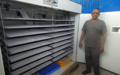 Linden's first chicken hatchery to push poultry rearing