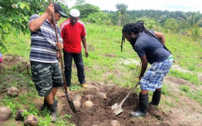 Farmers to own and operate commercial coconut nurseries