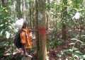 FAO lauds Guyana's untapped forest potential