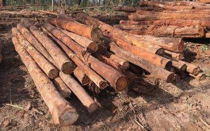 Forestry sees second year of consecutive growth