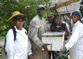 Sweet news for Linden beekeepers
