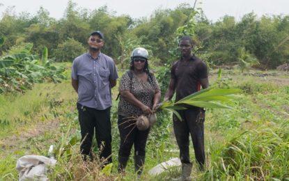 Mocha farmers get 300 coconut plants under RAID Programme